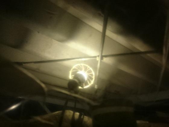 コウモリが入り込んだプレハブ倉庫の屋根裏