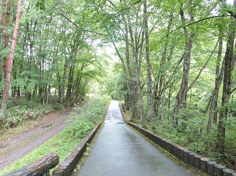 上三依水生植物園 男鹿川沿いの道