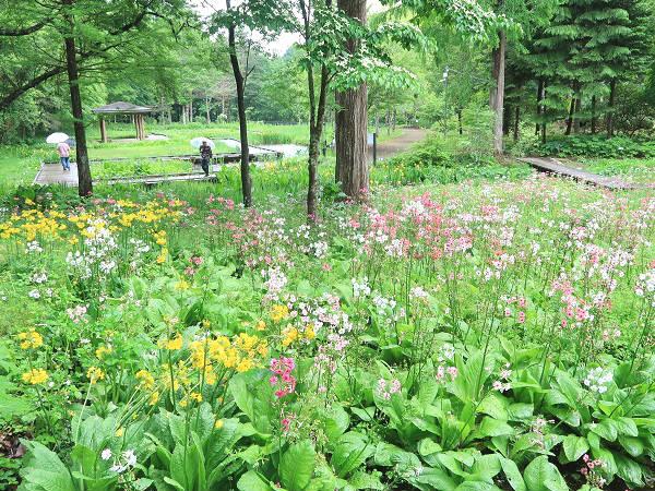 湿生草原ゾーン 上三依水生植物園