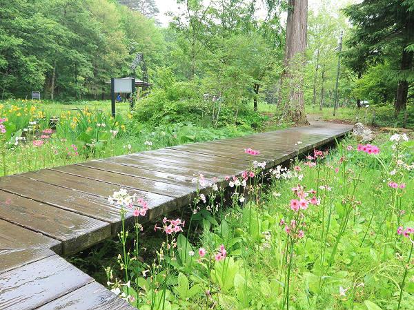 湿生草原ゾーンの木道 上三依水生植物園