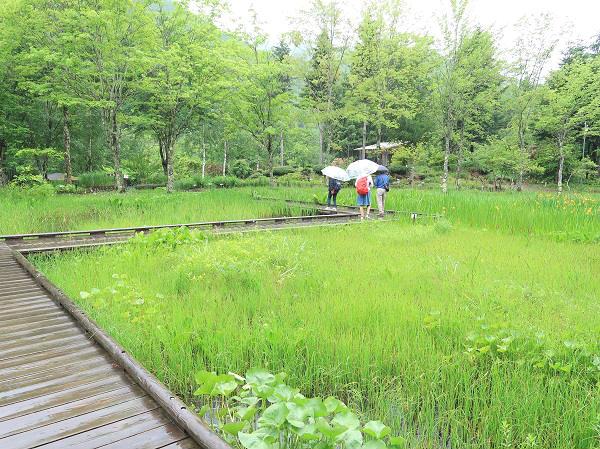 湿生植物池ゾーン 上三依水生植物園