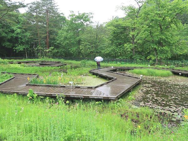 水生植物池ゾーン 上三依水生植物園