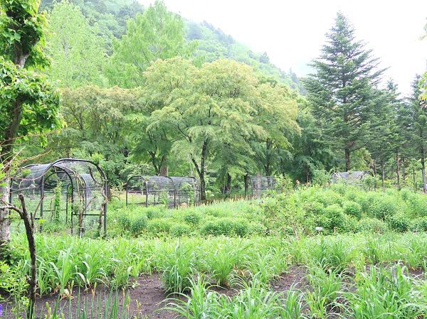 高原のお花畑ゾーン 上三依水生植物園
