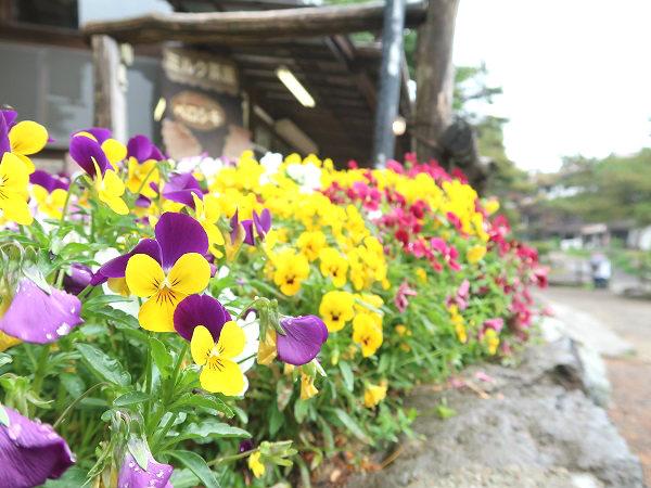 栃木県那須町の南ヶ丘牧場
