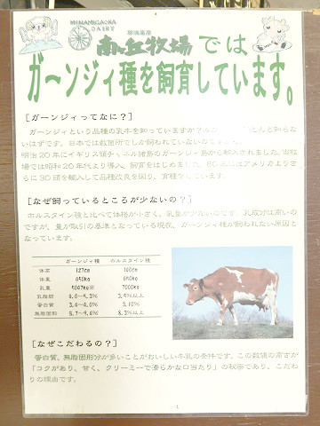 ガーンジィ牛について(ガンジー種)