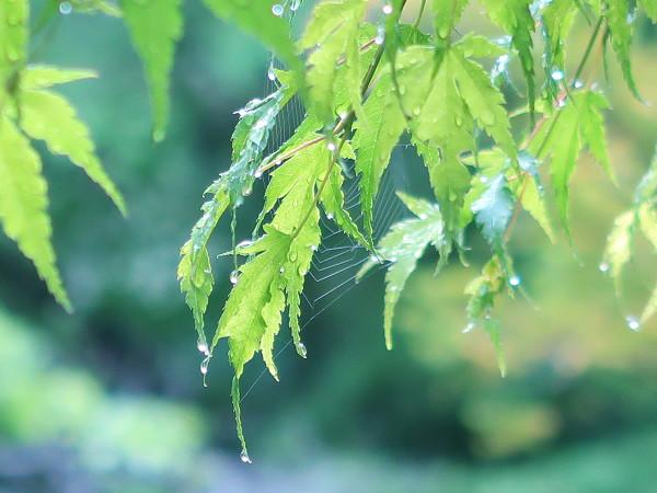 PowerShot G7 X Mark IIで撮影した雨上がりの植物
