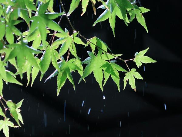 雨と植物 シャッタースピード1/200秒 F3.2