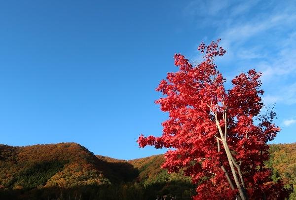 湯西川水の郷の紅葉