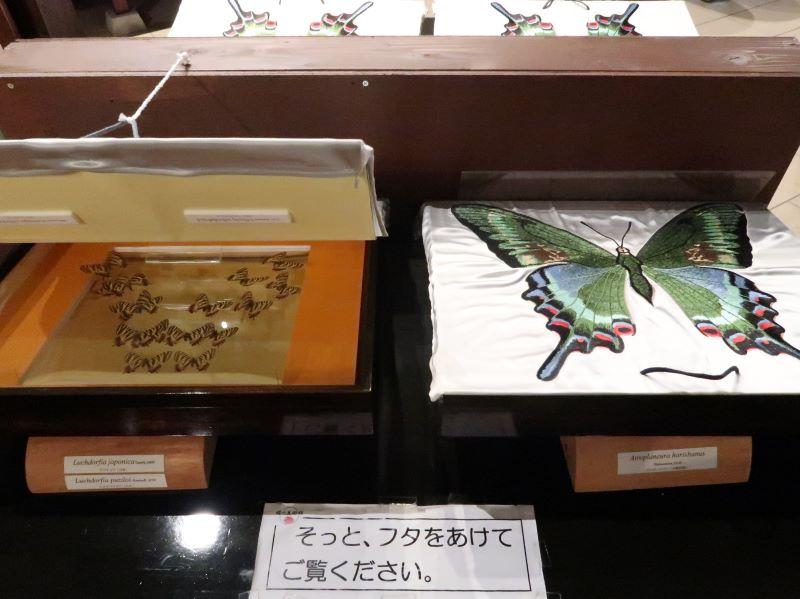 蝶の刺繍と標本 蝶の美術館 湯西川水の郷