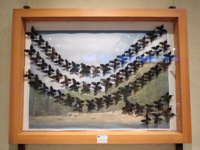 蝶の標本 津野田功さん作 蝶の美術館 湯西川水の郷