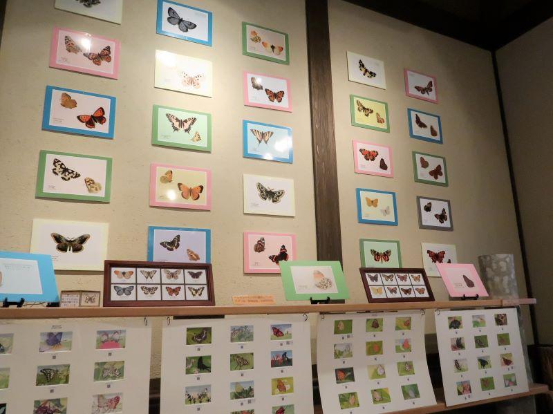 蝶の版画 蝶の美術館 湯西川水の郷