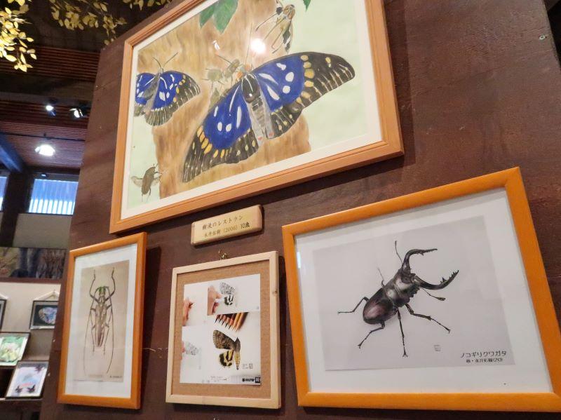 蝶と昆虫の絵 永井佑樹さん作 蝶の美術館 湯西川水の郷