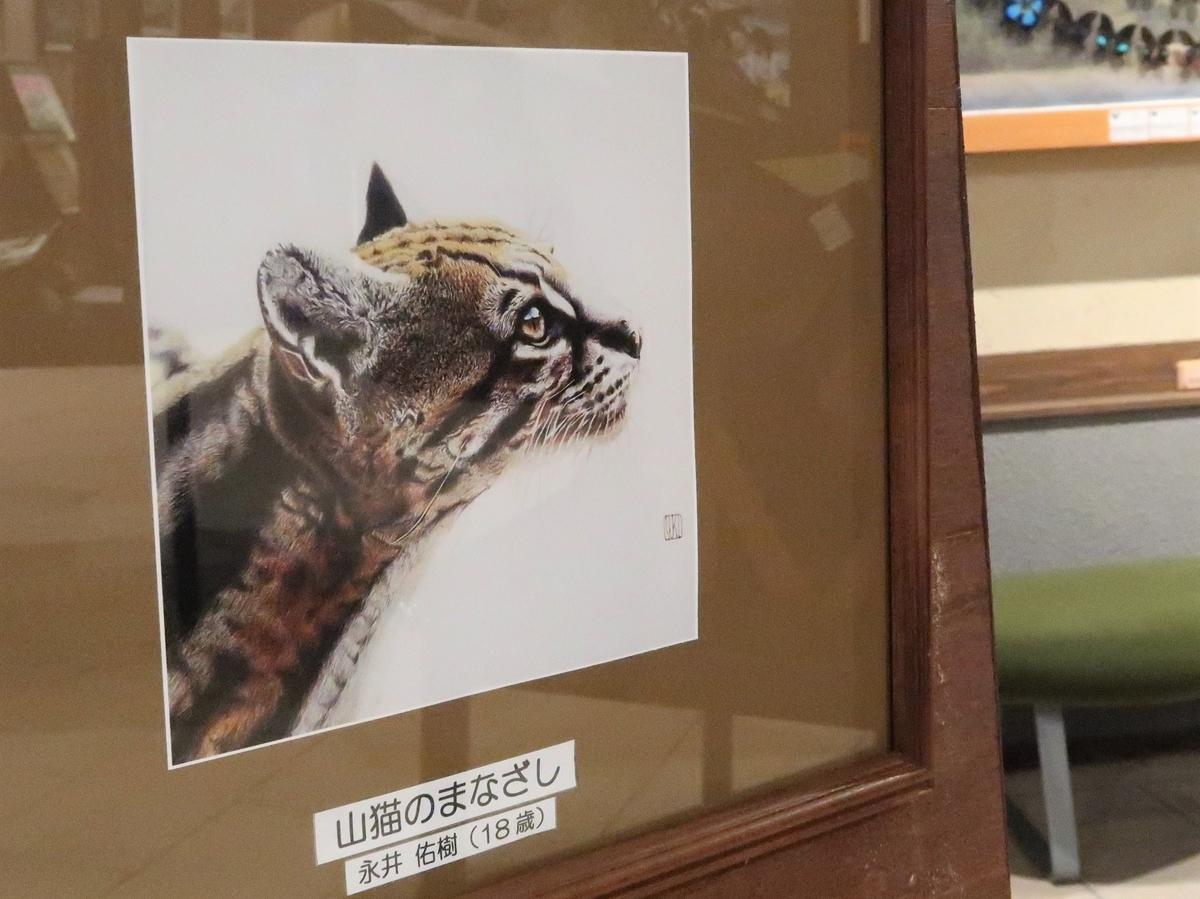 山猫のまなざし 永井佑樹さん作 蝶の美術館 湯西川水の郷