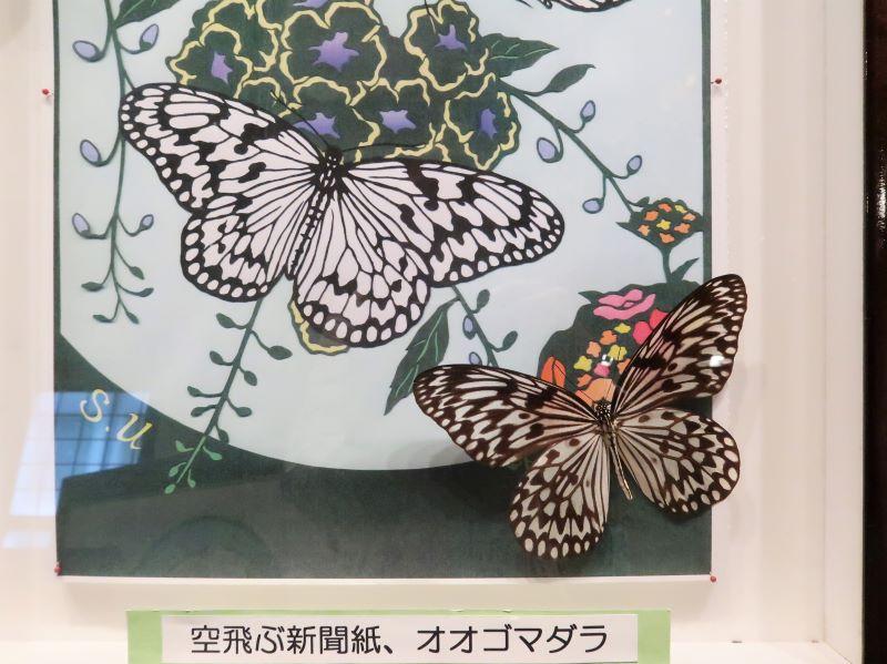 蝶の切り絵 宇津木信一さん作 蝶の美術館 湯西川水の郷