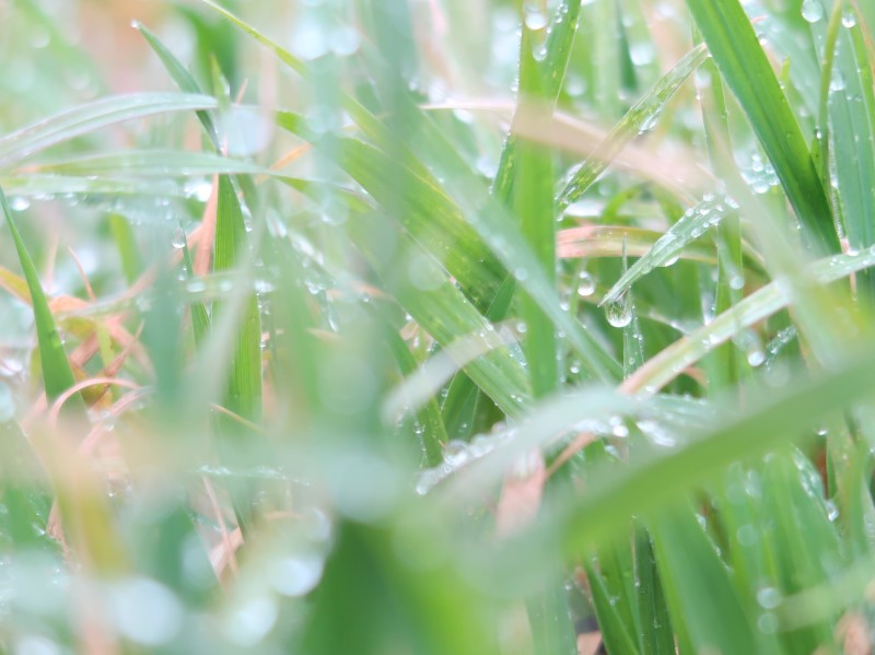 雨上がり 空地のしずく