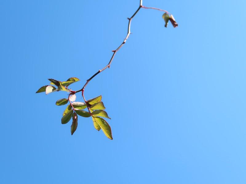 青空に踊る枝葉