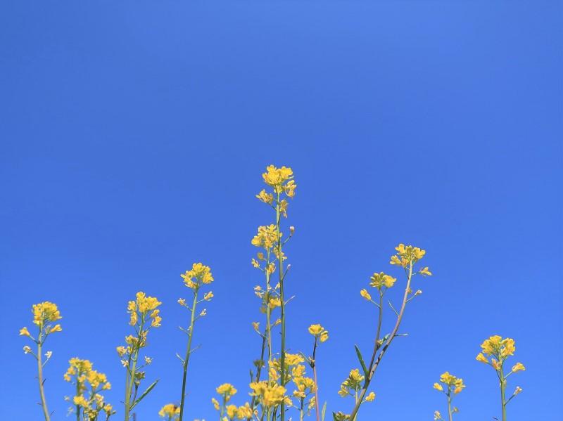 青空と春の花