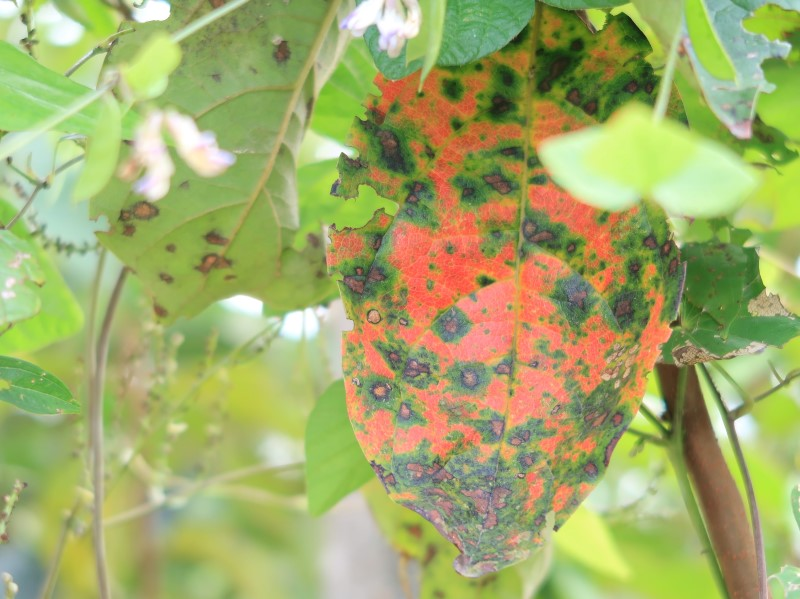 ふしぎな模様の葉