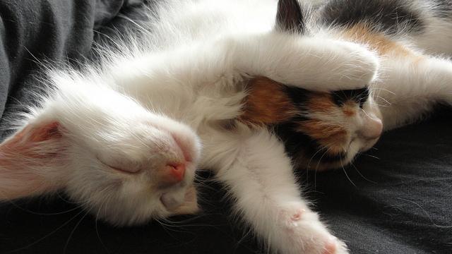 猫を飼うのを勧めない理由と、飼い始めるときに必要なもの、おすすめ猫グッズ | 変顔猫リュックと愉快な仲間達