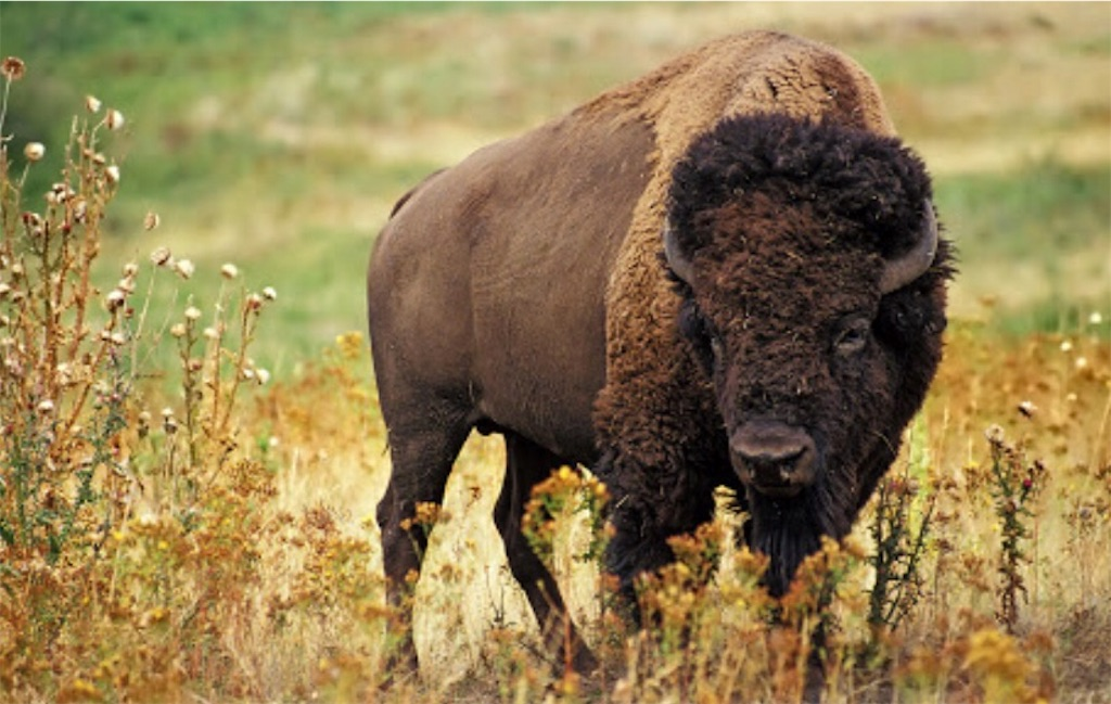 f:id:buffaloesblog:20190215075902j:image