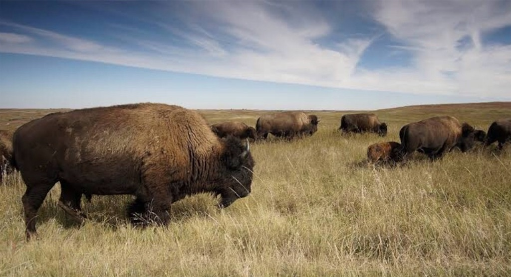 f:id:buffaloesblog:20190215080107j:image