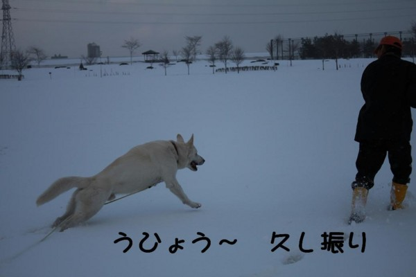 f:id:buhi84shin:20110402165945j:image