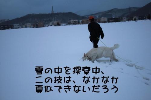 f:id:buhi84shin:20110402171948j:image:right