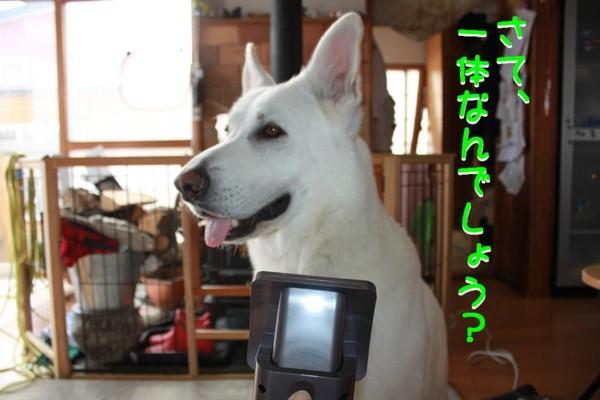 f:id:buhi84shin:20110407161338j:image:right