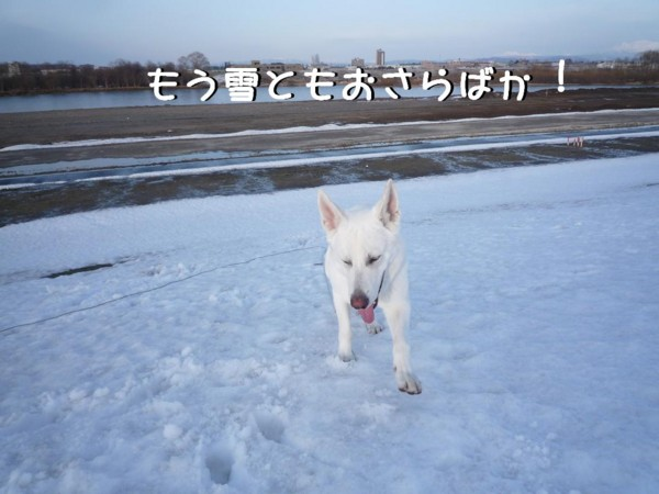 f:id:buhi84shin:20110409172646j:image