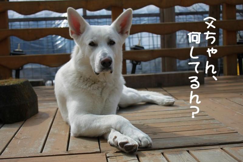 f:id:buhi84shin:20110414091509j:image