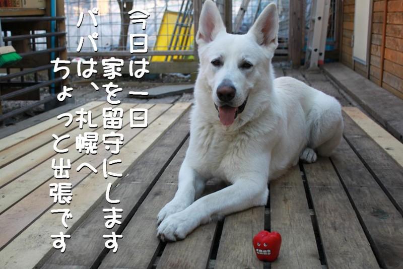 f:id:buhi84shin:20110414163021j:image