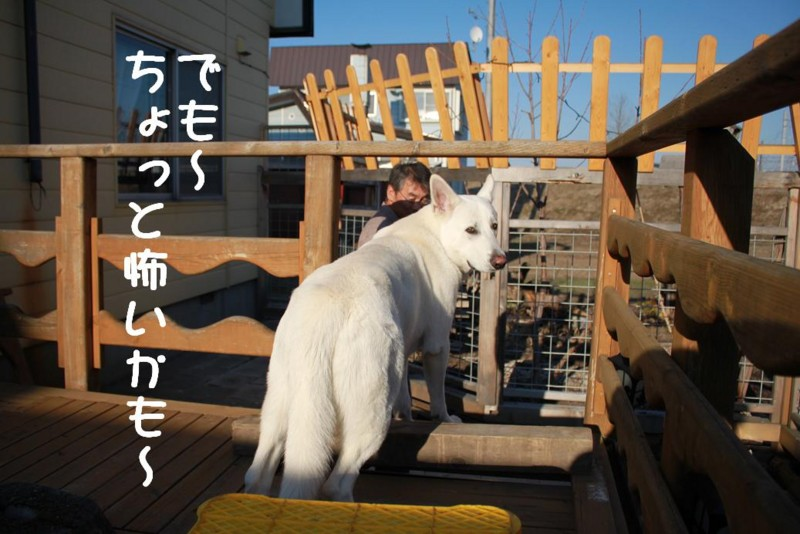 f:id:buhi84shin:20110414163549j:image