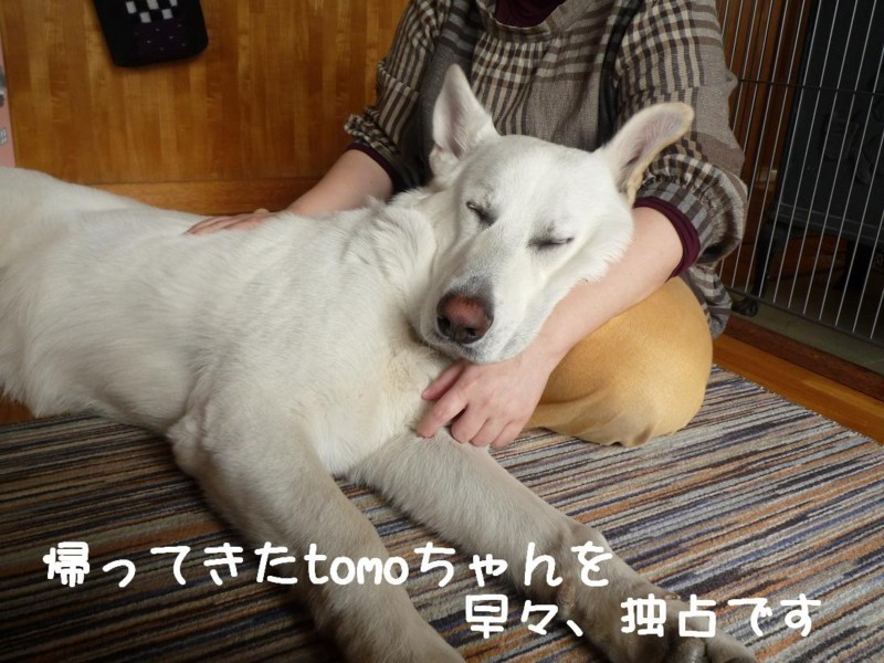 f:id:buhi84shin:20110415121356j:image