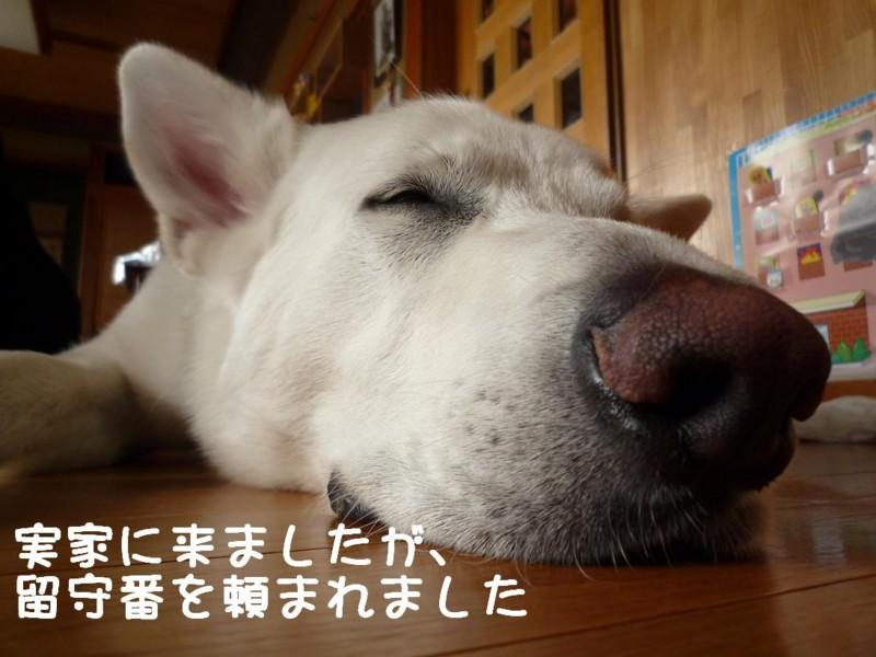 f:id:buhi84shin:20110415131003j:image