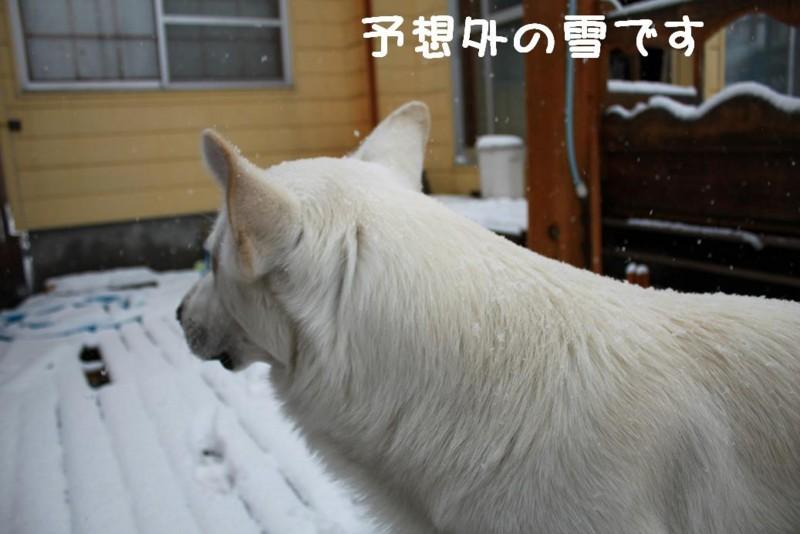 f:id:buhi84shin:20110417080518j:image