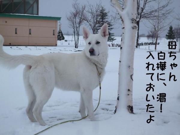 f:id:buhi84shin:20110417164349j:image:right