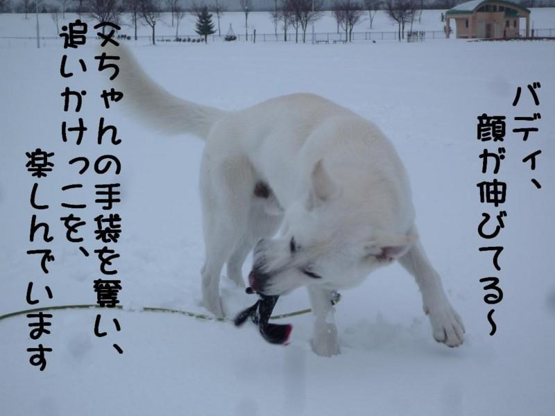 f:id:buhi84shin:20110417165039j:image