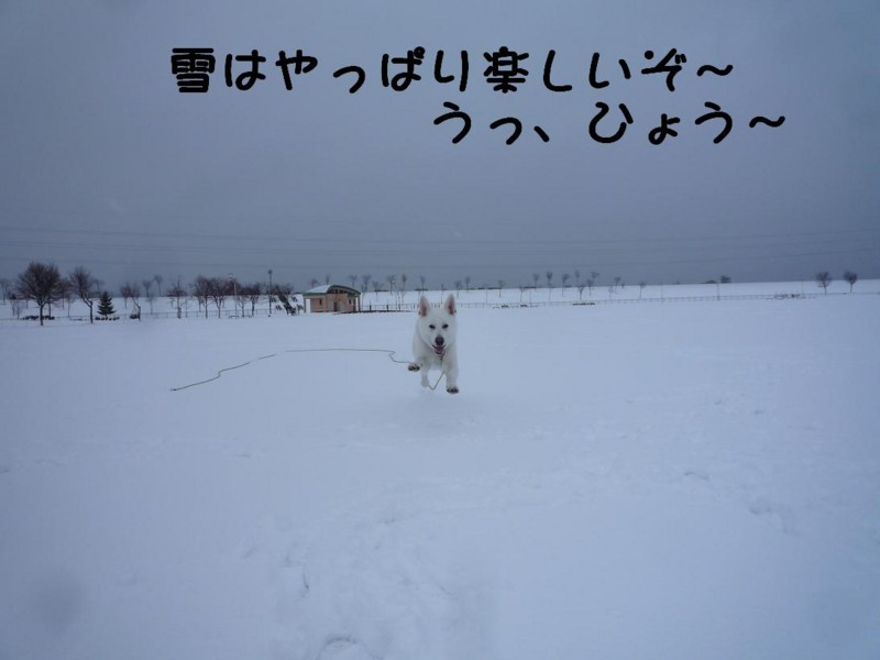 f:id:buhi84shin:20110417165556j:image