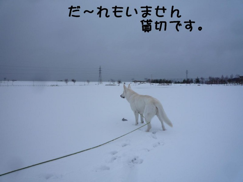 f:id:buhi84shin:20110417165739j:image