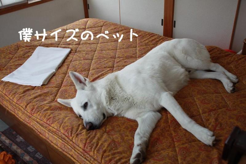 f:id:buhi84shin:20110418114813j:image