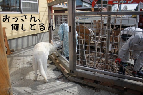 f:id:buhi84shin:20110420090647j:image:w360:left