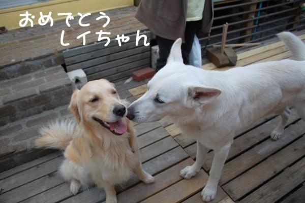 f:id:buhi84shin:20110420161224j:image:right