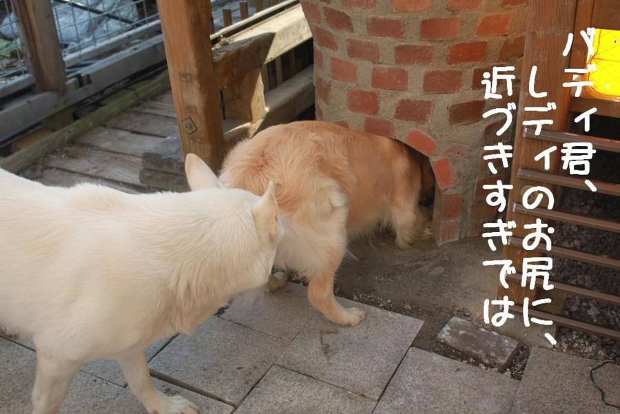 f:id:buhi84shin:20110420162114j:image
