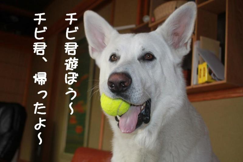f:id:buhi84shin:20110421141922j:image