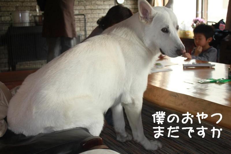 f:id:buhi84shin:20110421152552j:image