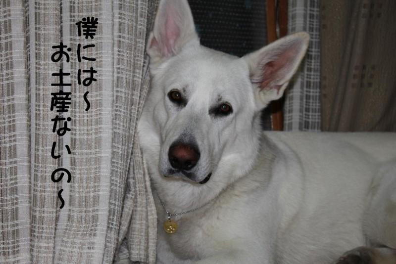 f:id:buhi84shin:20110423220838j:image
