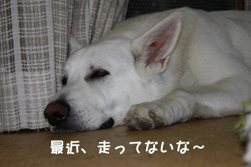 f:id:buhi84shin:20110423220944j:image