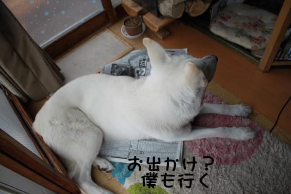f:id:buhi84shin:20110424075617j:image:left