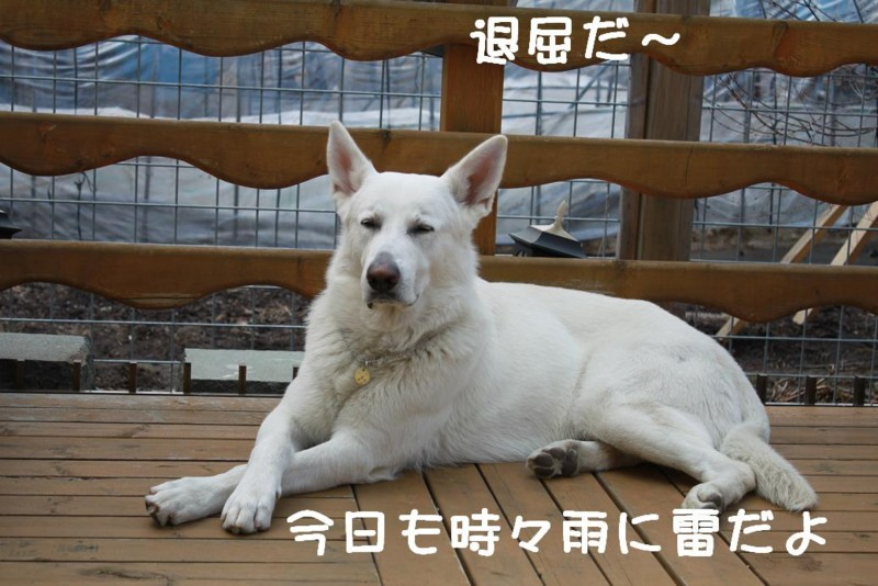 f:id:buhi84shin:20110426095812j:image