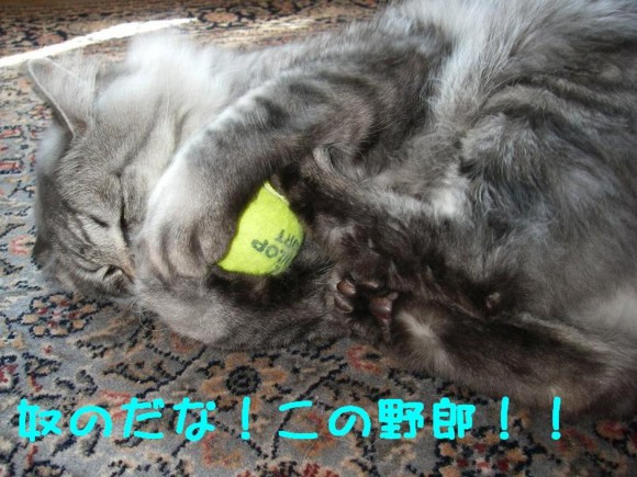 f:id:buhi84shin:20110426220749j:image:left
